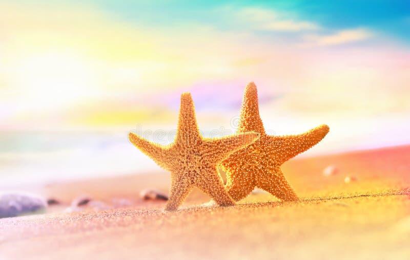 Starfish auf dem sandigen Strand stockfoto
