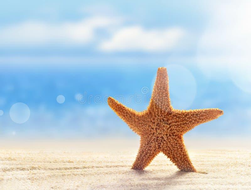 Starfish auf dem sandigen Strand stockbild