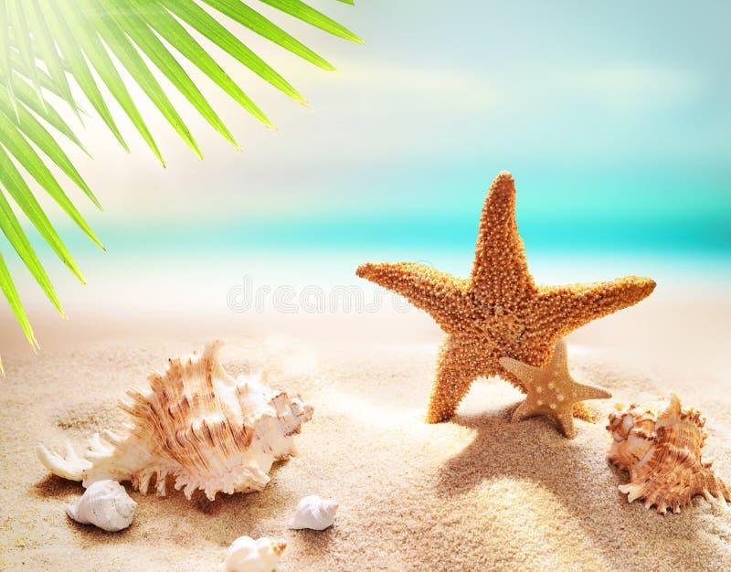 Starfish auf dem sandigen Strand und dem Palmblatt stockbild