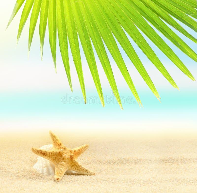 Starfish auf dem sandigen Strand und dem Palmblatt lizenzfreie stockfotografie