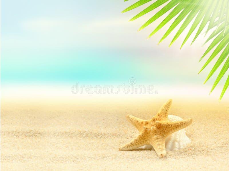 Starfish auf dem sandigen Strand und dem Palmblatt lizenzfreie stockfotos