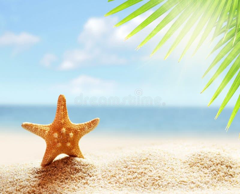 Starfish auf dem sandigen Strand und dem Palmblatt lizenzfreies stockfoto