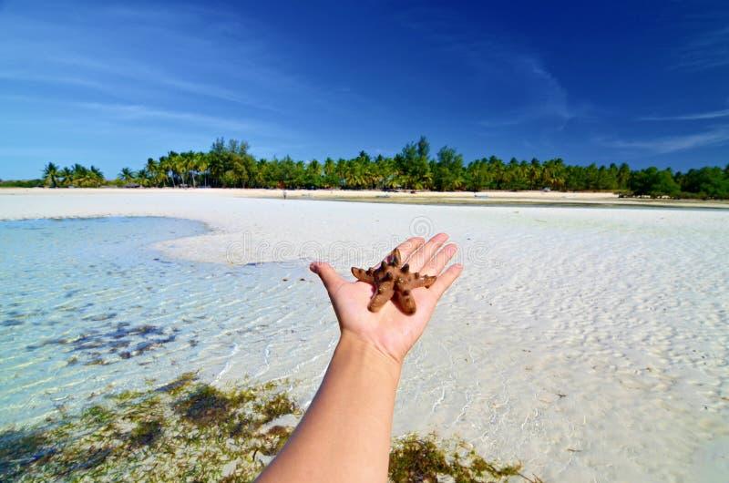 Starfish auf der Hand stockfoto