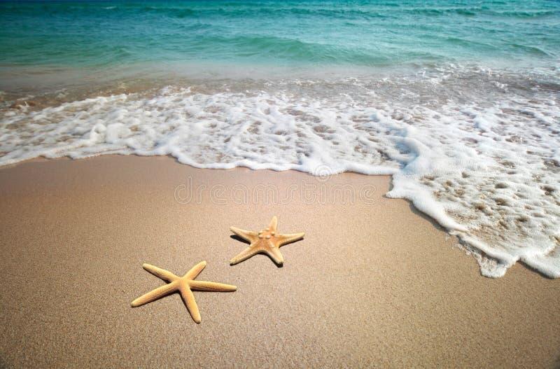 Starfish auf einem Strand stockfotos