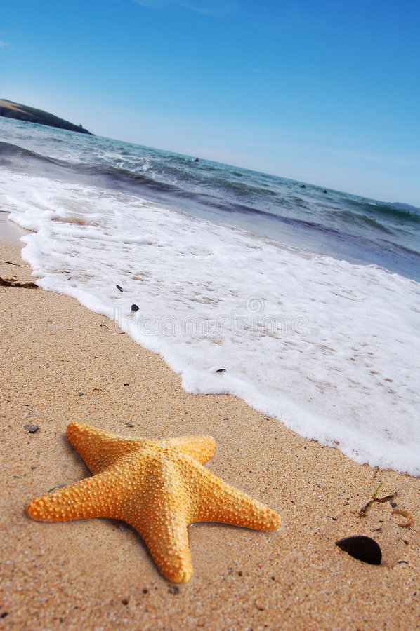 Starfish auf einem Strand lizenzfreies stockbild