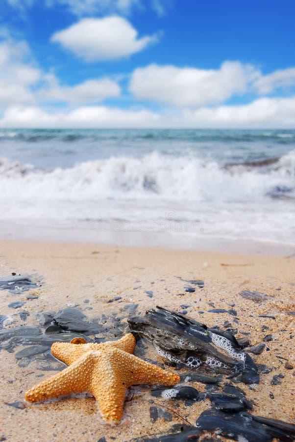Starfish auf Felsen stockbilder