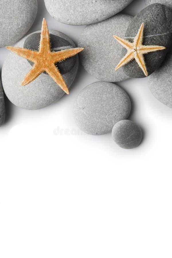 Starfish auf Kieseln stockfotos