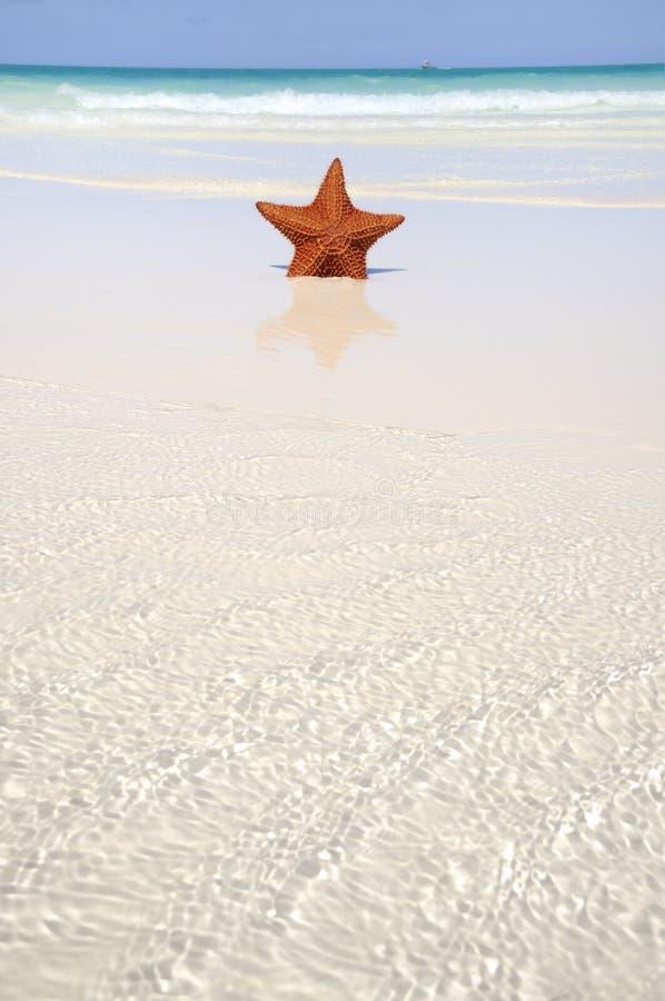 Starfish auf tropischem Paradies lizenzfreies stockfoto