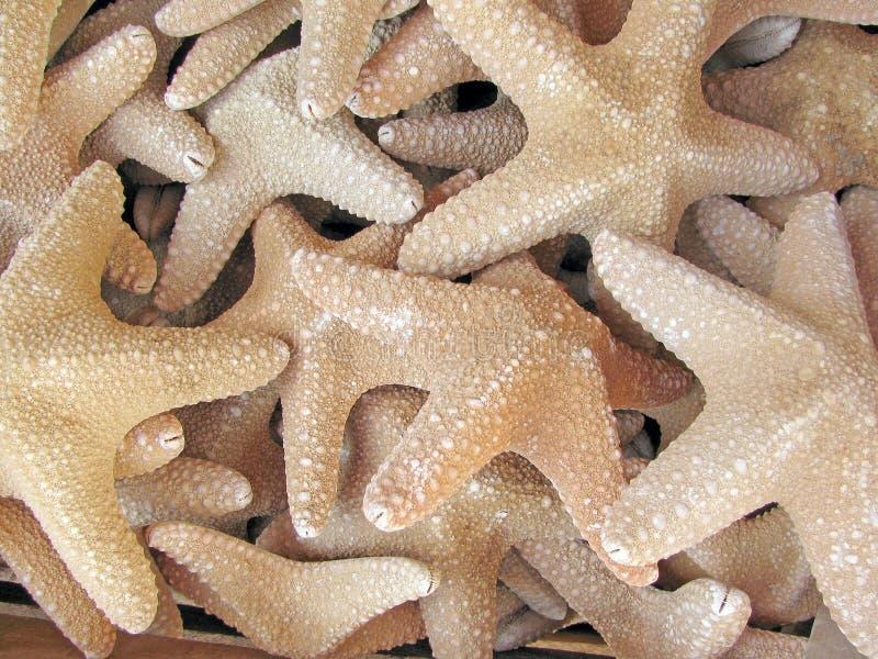 Starfish background stock images