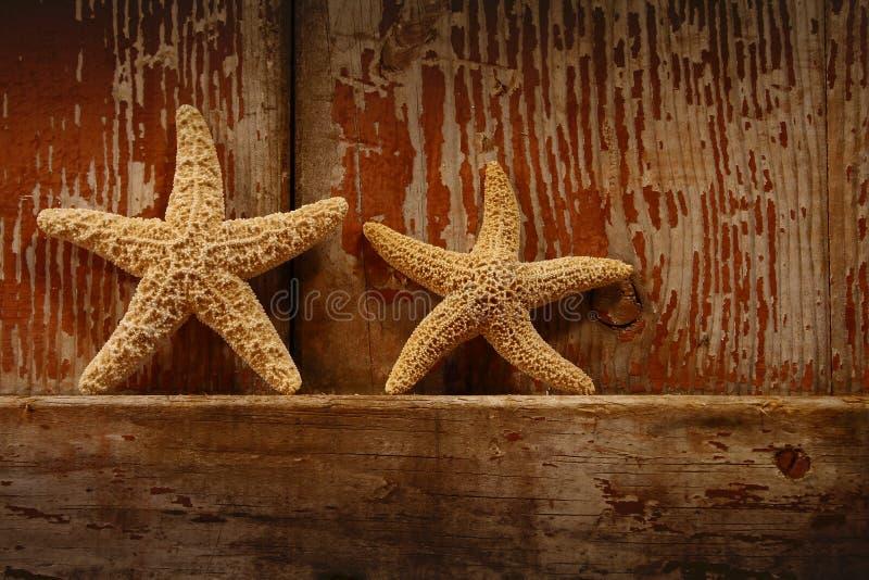 Starfish on barn door. Small starfish resting on the edge of a barn door royalty free stock image