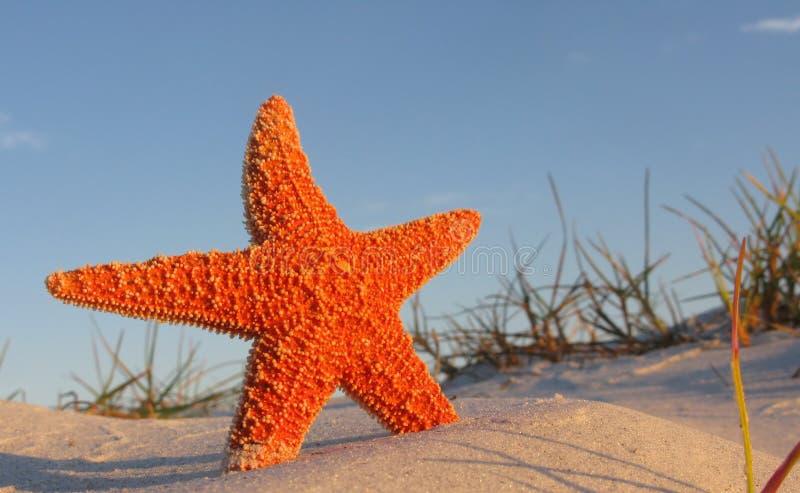 Starfish On Beach Royalty Free Stock Photography