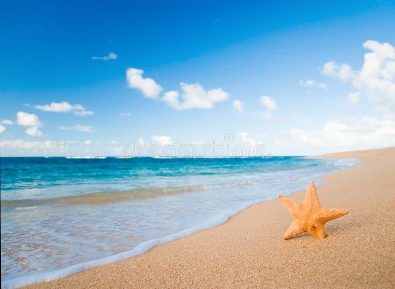 Starfish beach stock photos