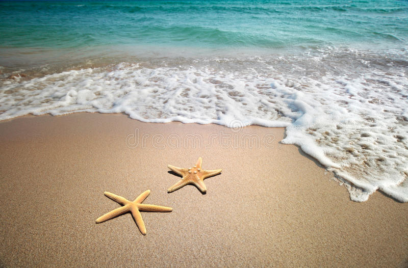Starfish on a beach stock photos