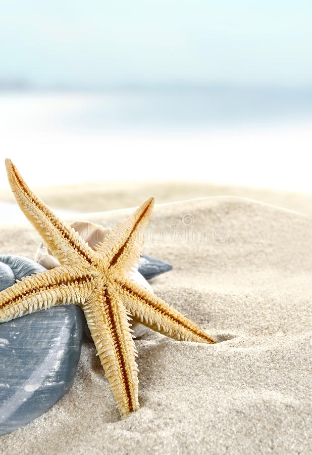Download Starfish on the Beach stock photo. Image of idyllic, paradise - 14337154