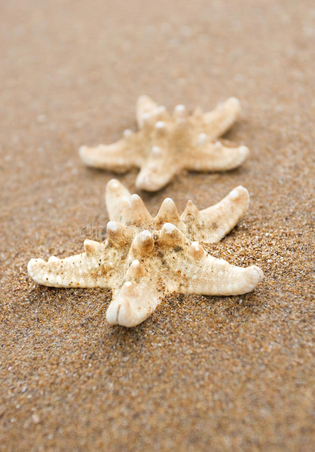 Download Starfish on the Beach stock image. Image of nature, water - 15676787