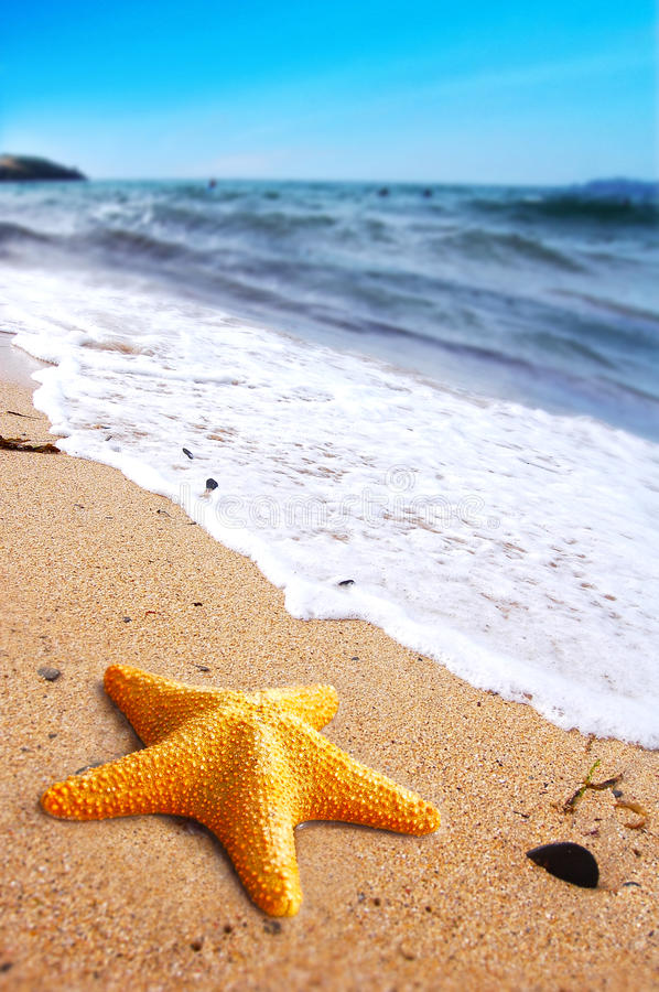 Download Starfish on a Beach stock photo. Image of animal, rising - 18878722