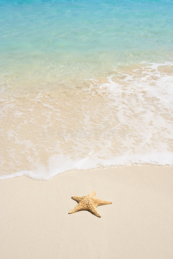 Download Starfish on The Beach stock photo. Image of backgrounds - 2461858
