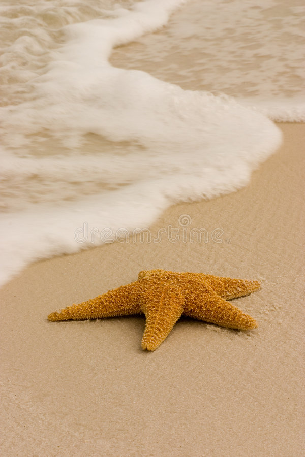 Download Starfish on the Beach stock image. Image of ocean, foam - 2521747