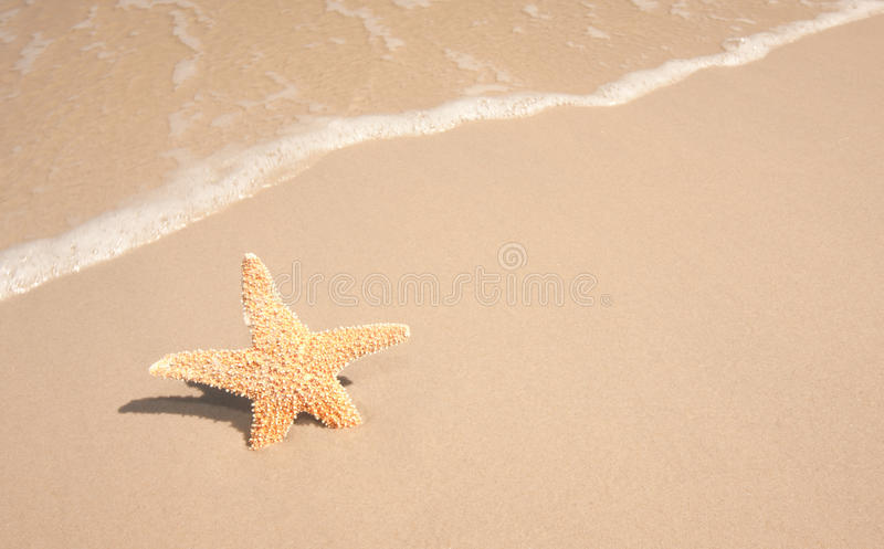 Download Starfish At The Beach stock image. Image of ocean, sandy - 26301053