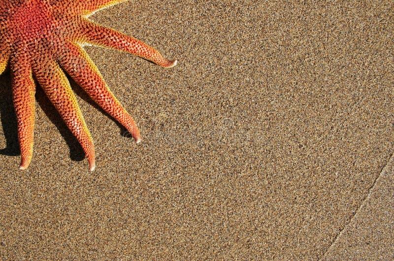 Starfish on Beach royalty free stock photo