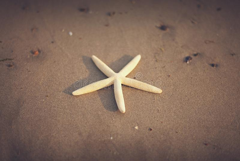Starfish On Beach Free Public Domain Cc0 Image