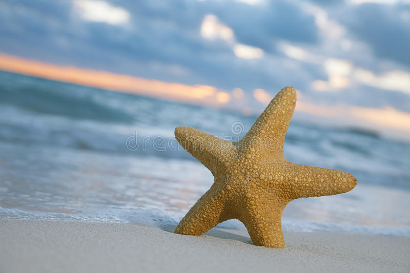 Starfish On Beach, Blue Sea And Sunrise Royalty Free Stock Images