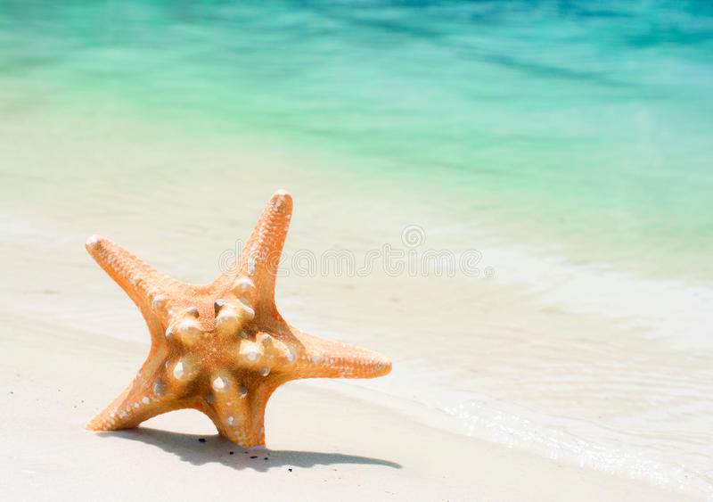 Download Starfish on the beach stock image. Image of sunny, ocean - 32440861