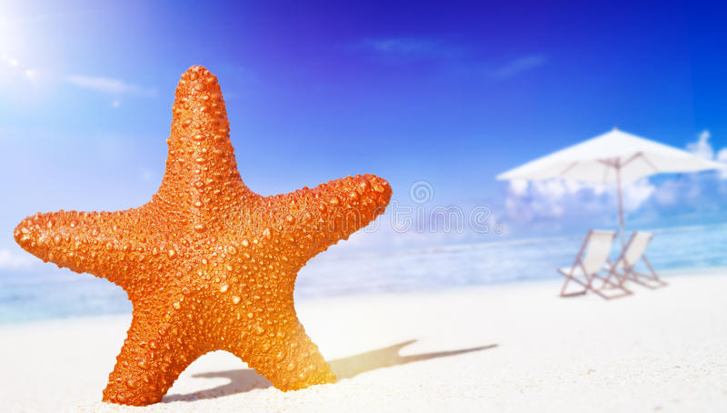 Starfish on the beach Freedom Tropical Concept.  royalty free stock photo