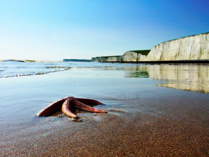 Starfish on beach stock photos
