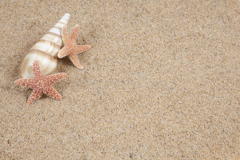 Starfish in the beach sand - copy stock image