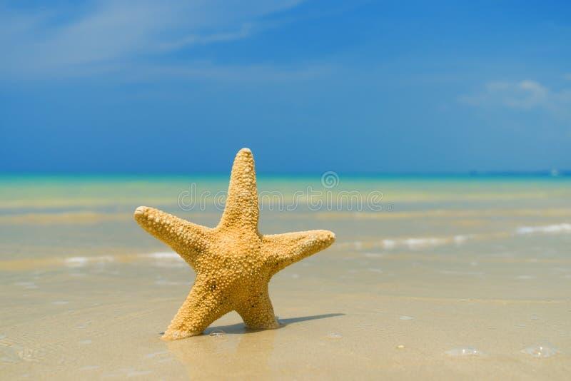 Starfish on the Beach stock image