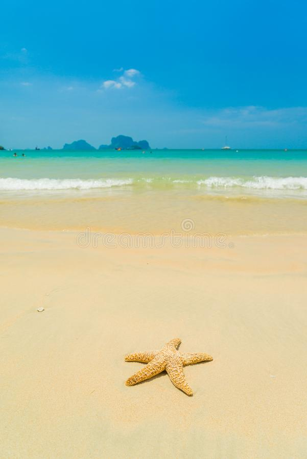 Starfish on the beach on a sunny day royalty free stock image
