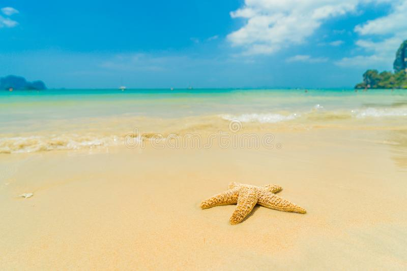 Starfish on the beach on a sunny day stock image