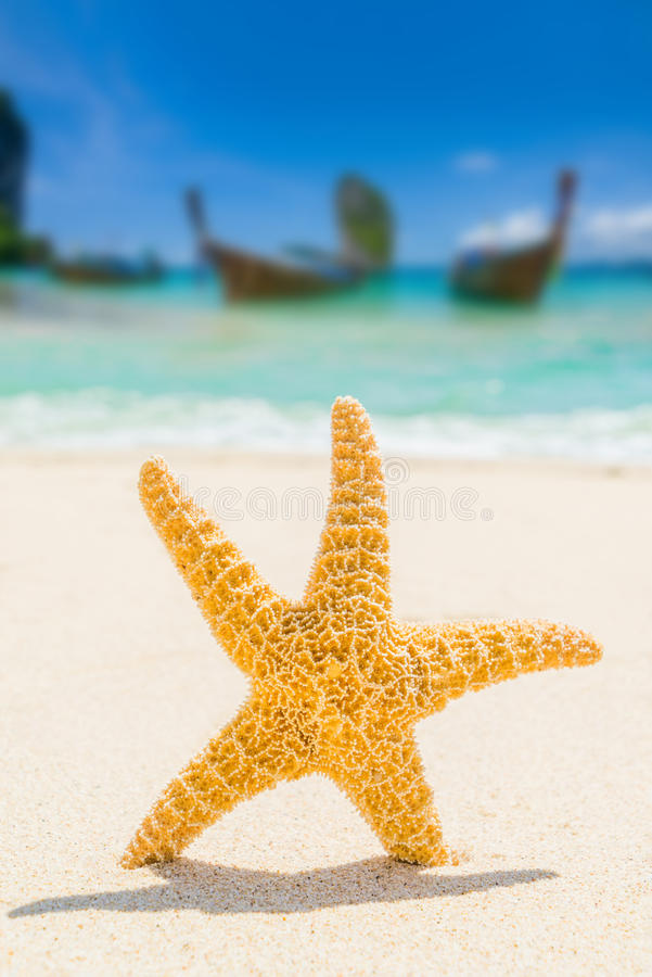 Starfish at the beach royalty free stock photos
