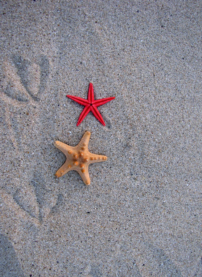 Download Starfish And Bird Traces Of The Sand Stock Photo - Image of coastal, background: 15799488