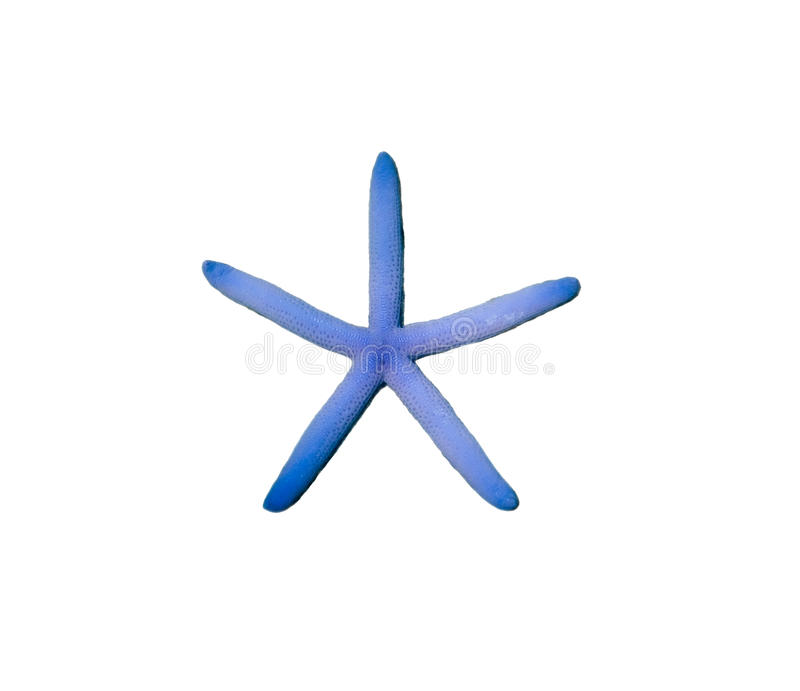 Starfish blue color five radial royalty free stock photo
