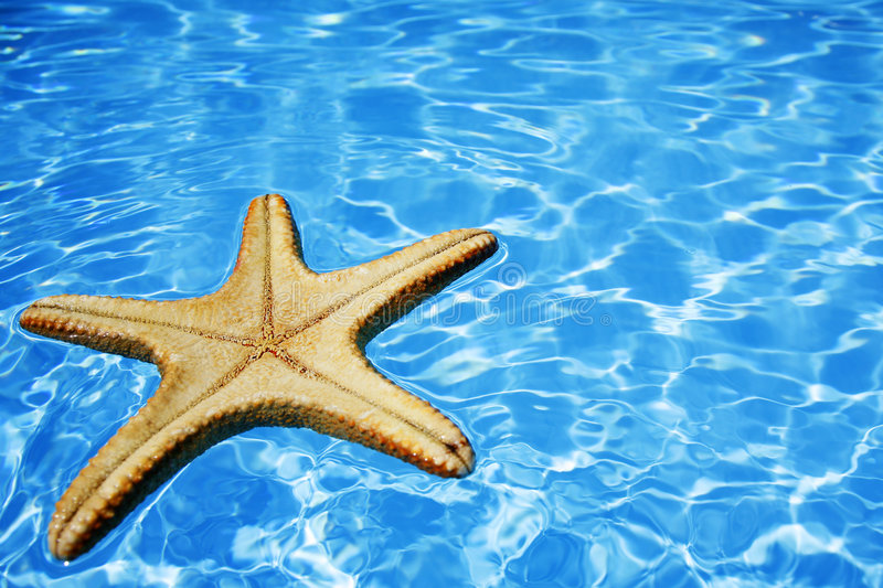 Starfish in Blue Water royalty free stock images