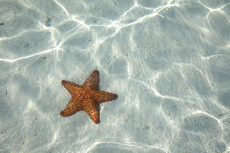 Starfish on the bottom royalty free stock images