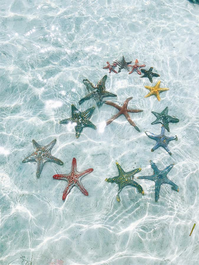 Starfish at the bottom of the ocean under the rays of the sun stock image