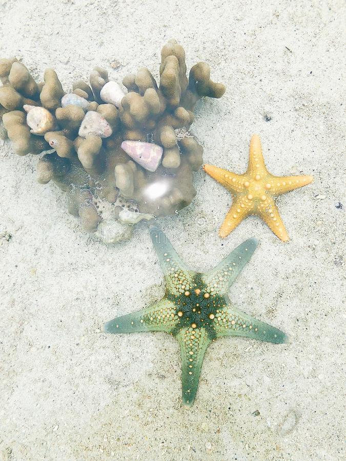 Starfish at the bottom of the ocean under the rays of the sun stock photo