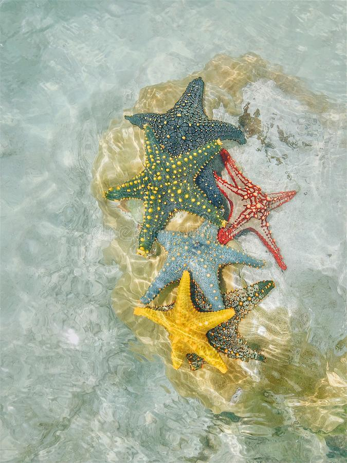 Starfish at the bottom of the ocean under the rays of the sun royalty free stock image