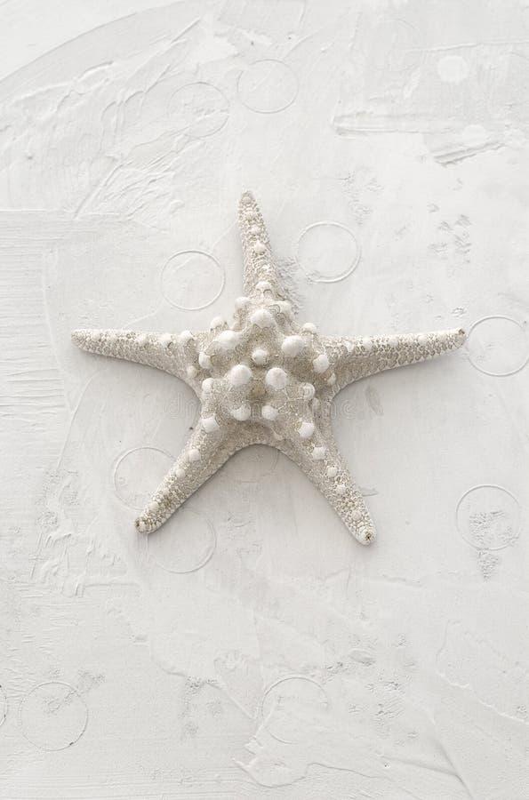 Starfish brancos imagem de stock