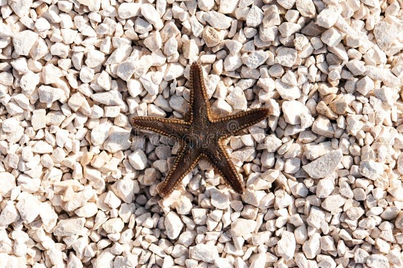 Starfish on bright stony beach royalty free stock image