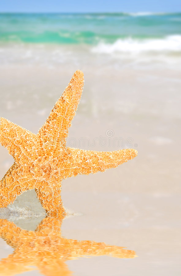 Free Starfish By Tidepool On Beach Royalty Free Stock Photo - 5399825