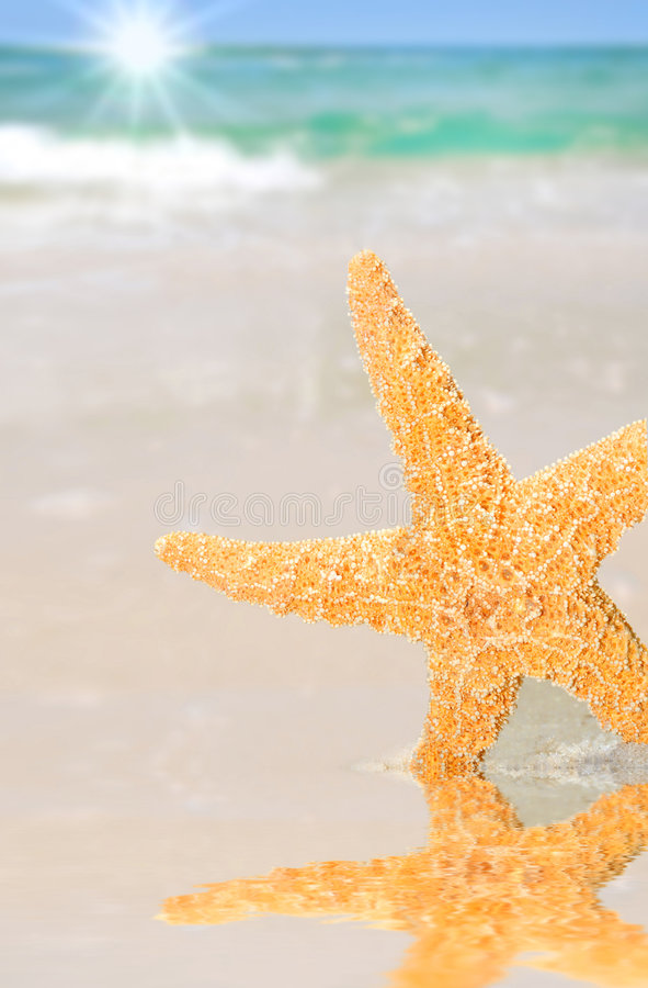 Free Starfish By Tidepool On Beach Stock Images - 8741274