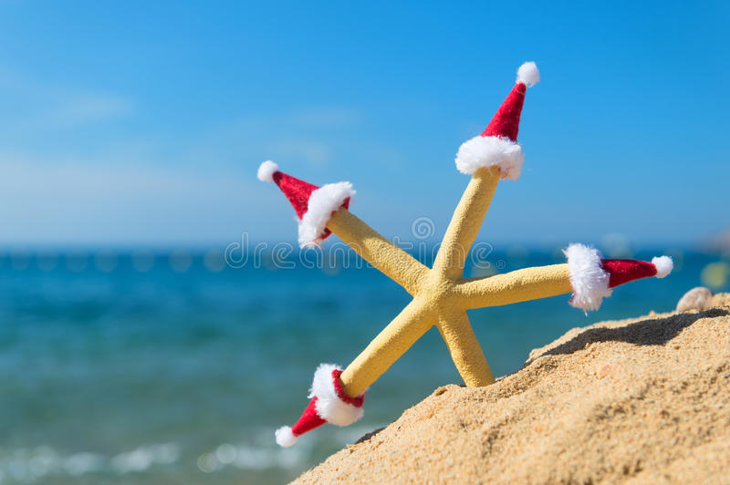 Starfish with Christmas hats. Funny starfish at the beach wearing hats of Santa Claus for Christmas stock photo