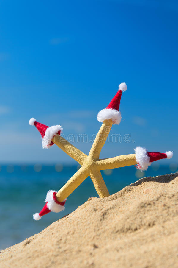 Starfish with Christmas hats. Funny starfish at the beach wearing hats of Santa Claus for Christmas royalty free stock photos