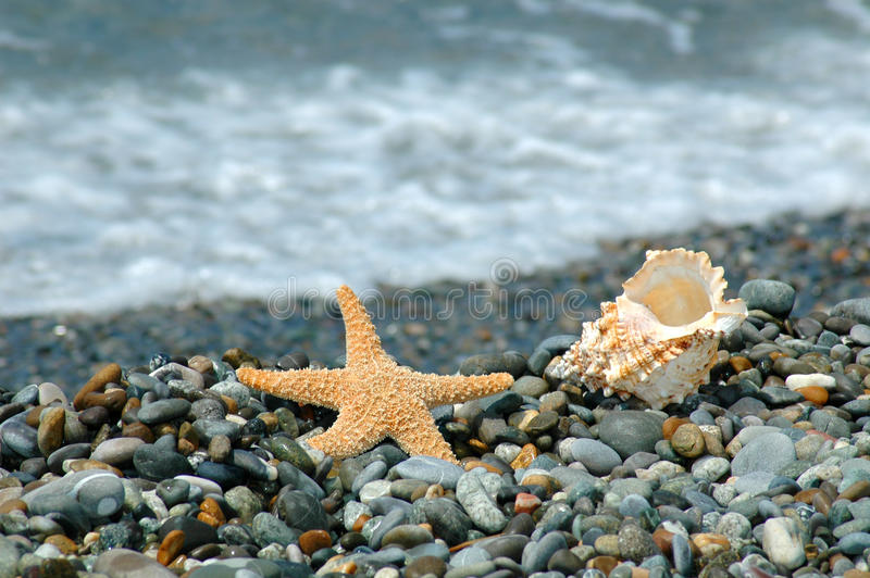 Starfish and cockleshell lie on a pebble royalty free stock photos