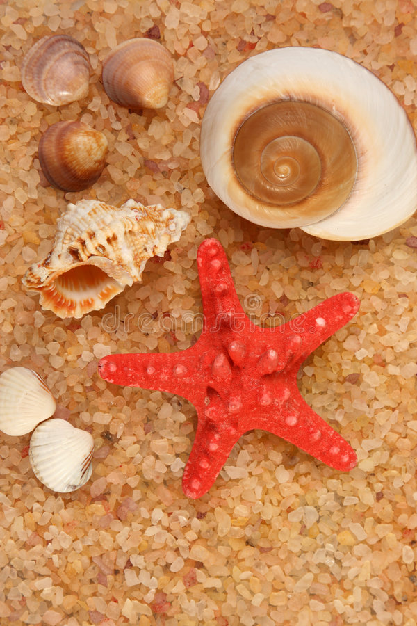Starfish and cockleshells royalty free stock photo