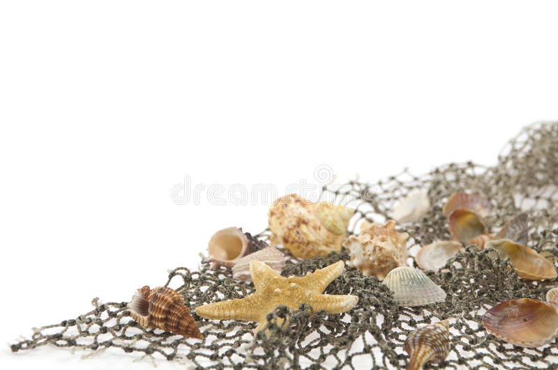 Starfish and cockleshells lie on a fishing net stock photography